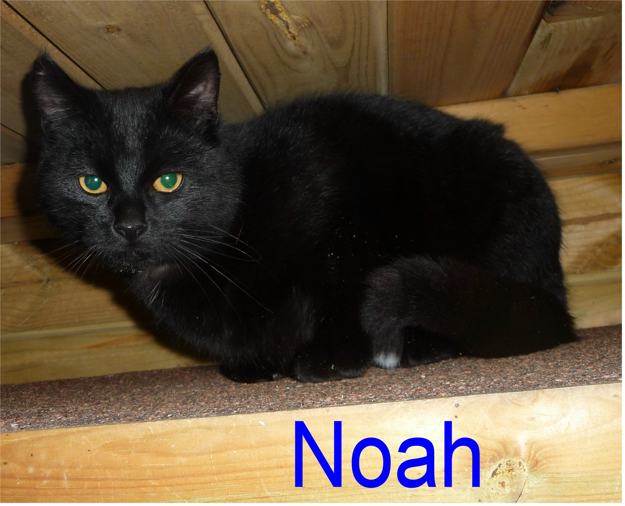 Heather Noah Lancashire Cat Rescue