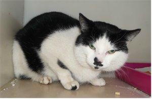 Beechway Cat